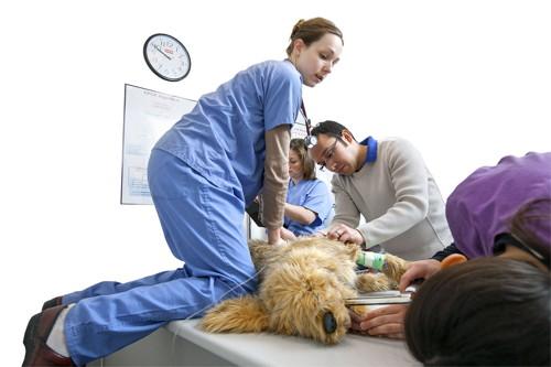 Dog Emergency Room